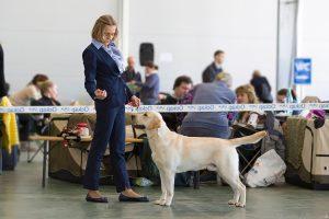 Всероссийская выставка собак ООО «РКК»