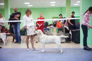Выставка в Белгороде